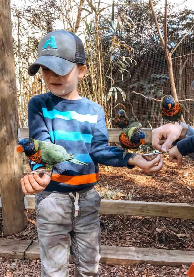 a little boy feeding the lorikeets at the zoo