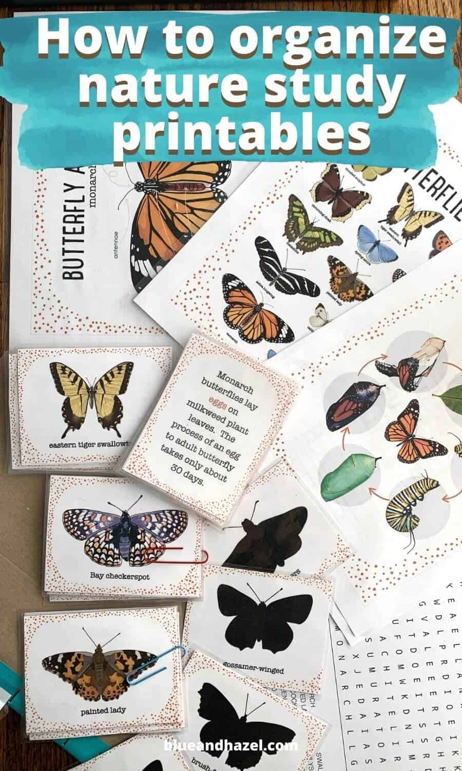 Butterfly Unit Study: exploring nature with children filing system