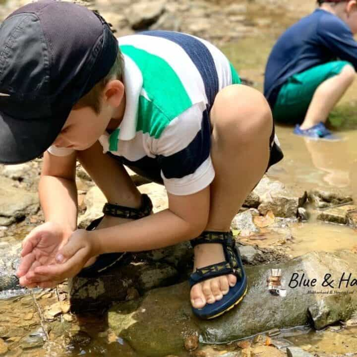 A boy catching tadpoles in a creek to take home and put in a tank.
