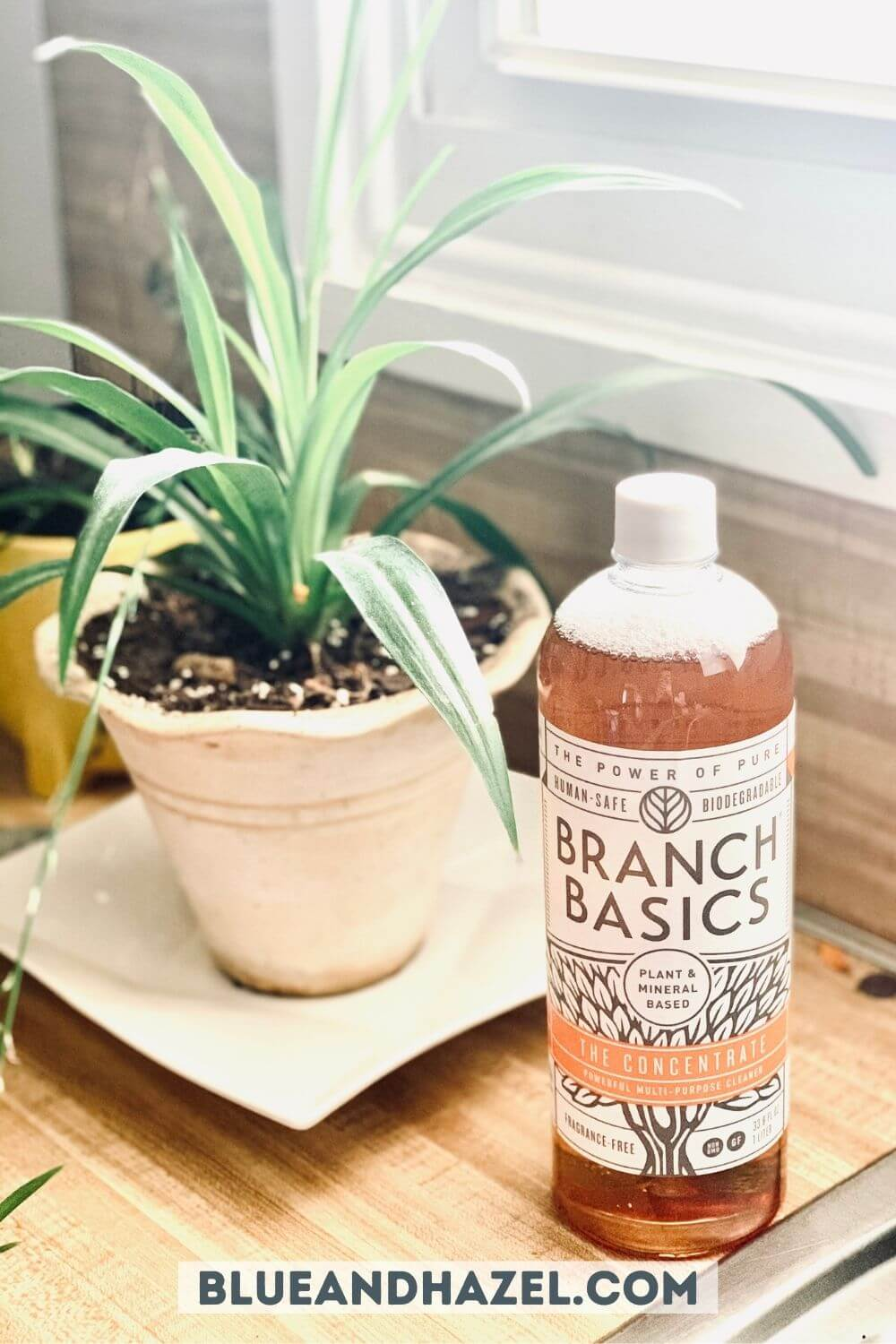 Branch Basic concentrate bottle next to a green leafy plant.