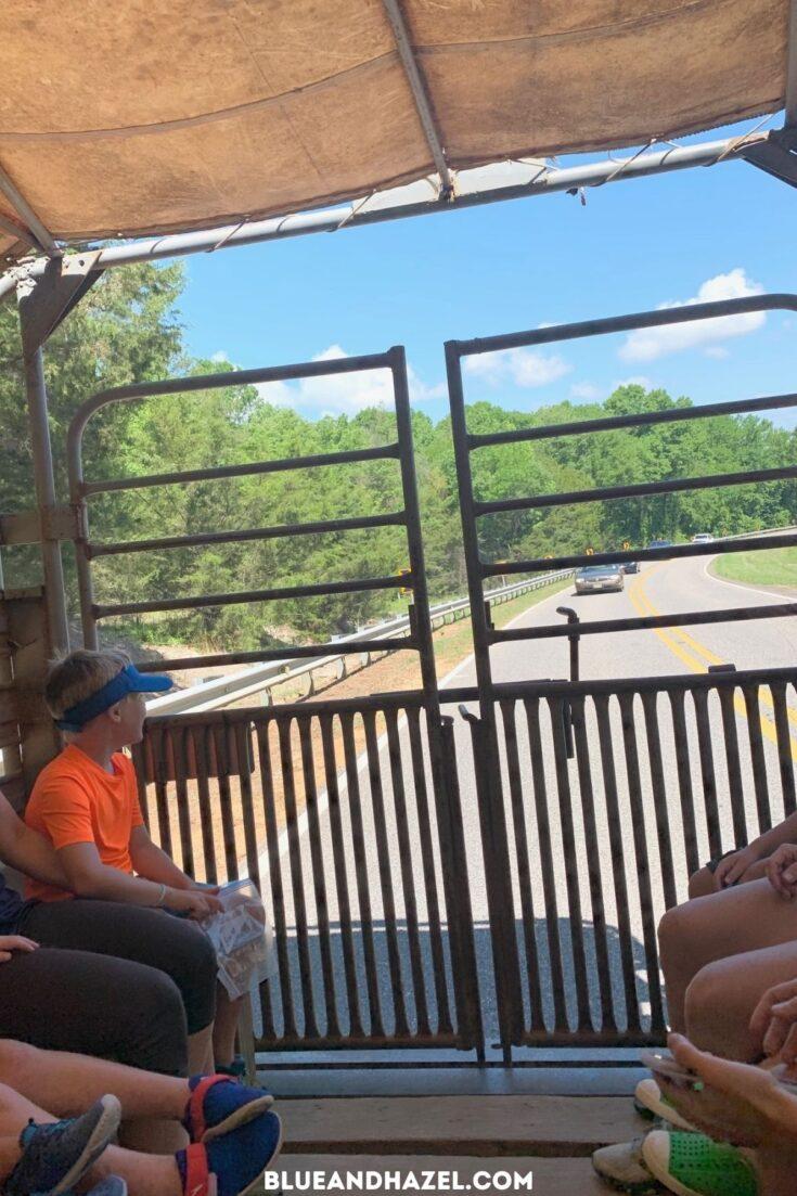 Riding the Shark Tooth Creek Express