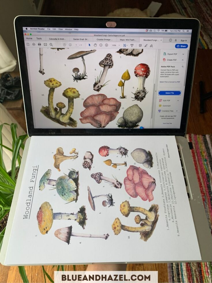printed picture of mushrooms next to a computer screen