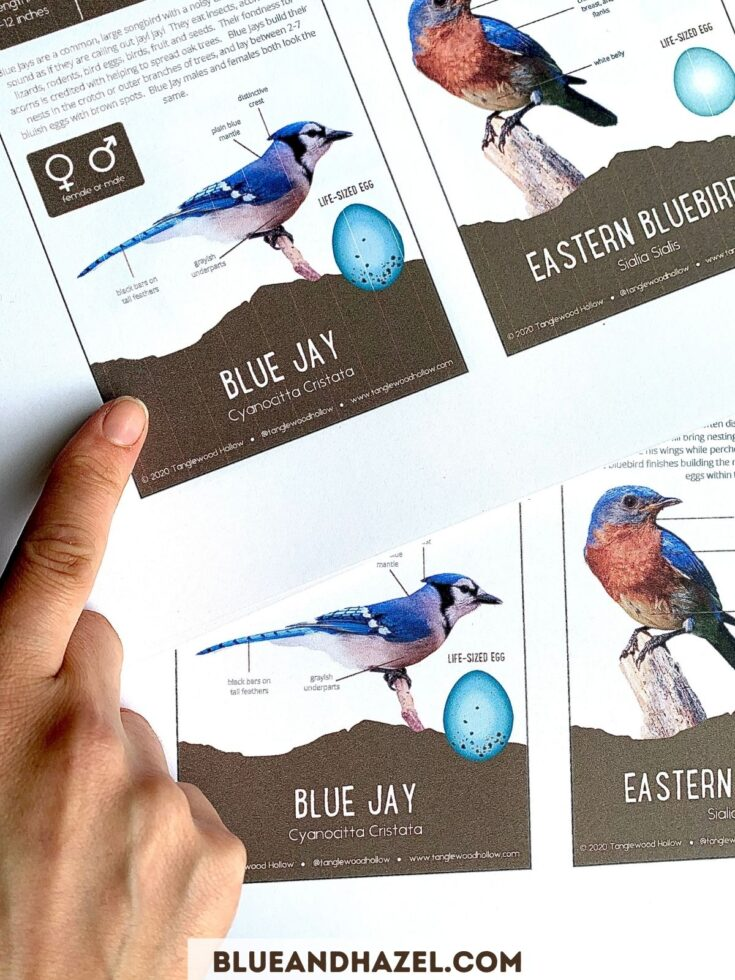 Blue jay pictures printed side by side, one with printer streaks from an Epson Ecotank and the other with no streaks after cleaning the ink heads.