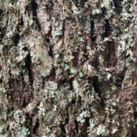 tree bark close up for nature study